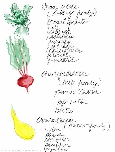 plant_families_drawing_list_2_michaela_medina_harlow_thegardenerseden.com
