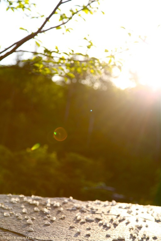 Blossom_Strewn_Terrace_Michaela_Medina_Harlow_thegardenerseden.com