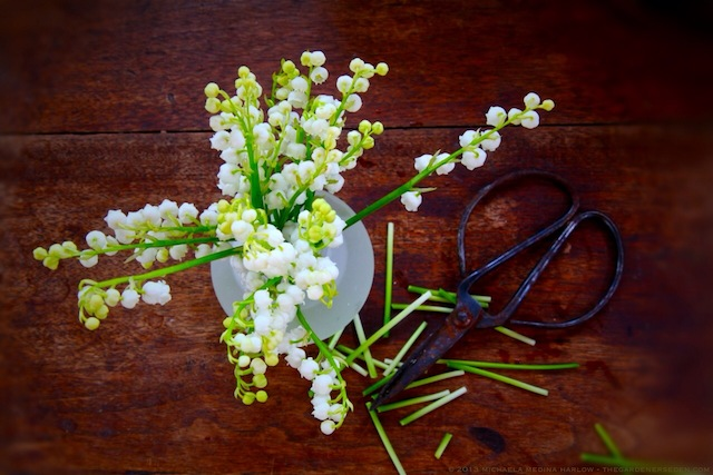 Muguet_Convallaria_majalis_Lily-of-the-Valley_michaela_medina_harlow_thegardenerseden.com