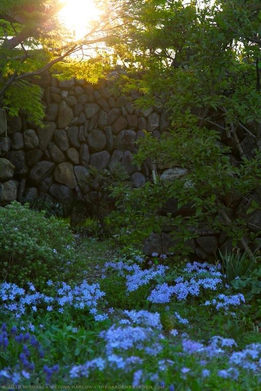 Secret_Garden_May_Sunset_2013_ Michaela_Medina_Harlow_thegardenerseden.com
