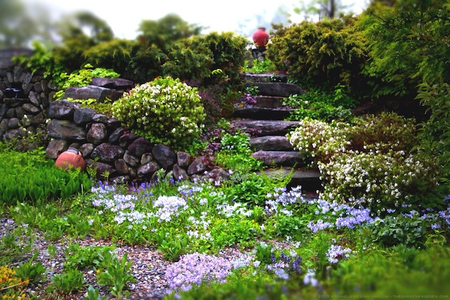 Secret_Garden_Steps_May_2013_Michaela_Medina_Harlow_thegardenerseden.com