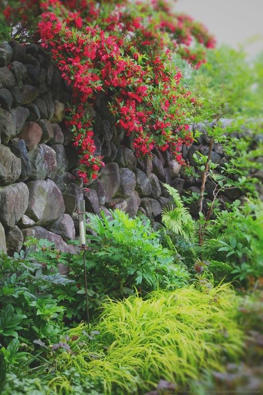 Secret_Garden_in_Rain_michaela_medina_harlow_thegardenerseden.com