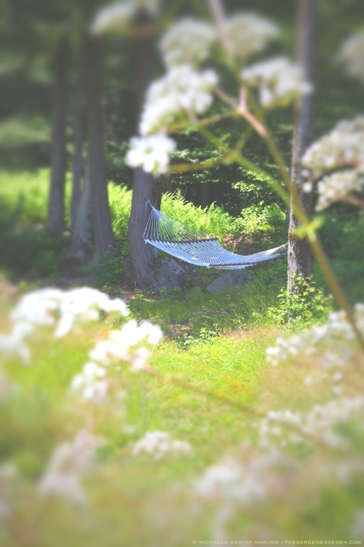 Summer Hammock at the Edge of the Forest - michaela medina harlow - thegardenerseden.com