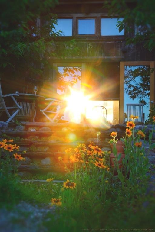Summer's Wild Wonder - michaela medina harlow - thegardenerseden.com