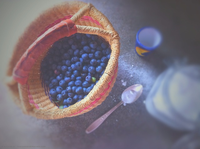 blueberries from the garden