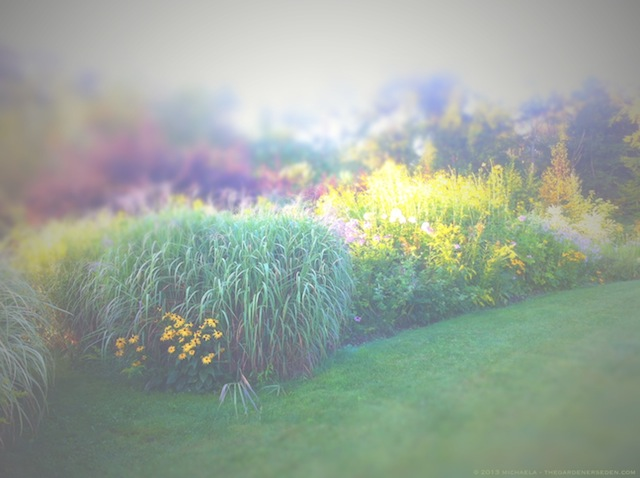Hazy Late August Light - michaela medina harlow - thegardenerseden.com