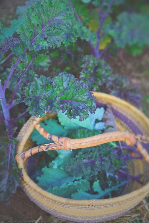 Redbor and Rainbow Lacinato Kale Harvest - michaela medina harlow - thegardenerseden.com
