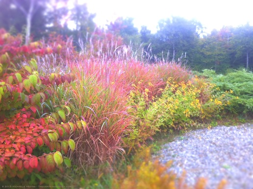 Meadow Border with Shasta Viburnum, Flame Grass and Coneflower in Autumn - michaela medina harlow - thegardenerseden.com