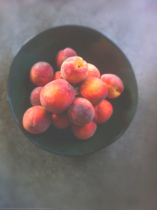 Scott Farm Peaches in a Bowl - michaela medina harlow - thegardenerseden.com