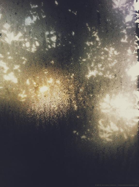 September Sunrise - michaela m harlow - thegardenerseden.com