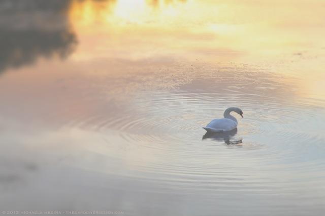 Swan Song of Summer - michaela medina harlow - thegardenerseden.com