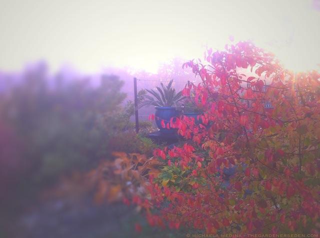 Blackhaw Viburnum and King Cycas in the Turquoise Pot - October - michaela medina harlow - thegardenerseden.com