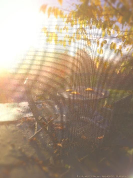 Golden October Halesia Leaves - michaela medina harlow - thegardenerseden.com
