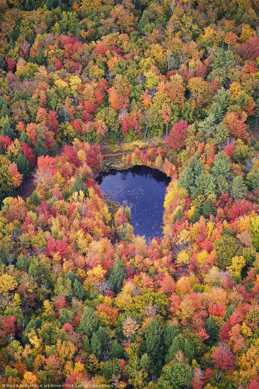 October Blue, Newfane, Vermont - michaela medina harlow - thegardenerseden.com