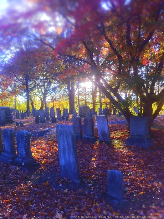 Riverside Cemetery - Sunlit Canopy - michaela medina harlow - thegardenerseden.com