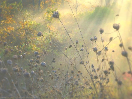 Through Golden Mist ll - michaela medina harlow - thegardenerseden.com
