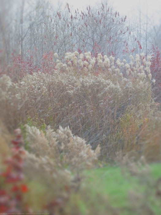 November Snow Squall in the Garden - michaela medina harlow - thegardenerseden.com