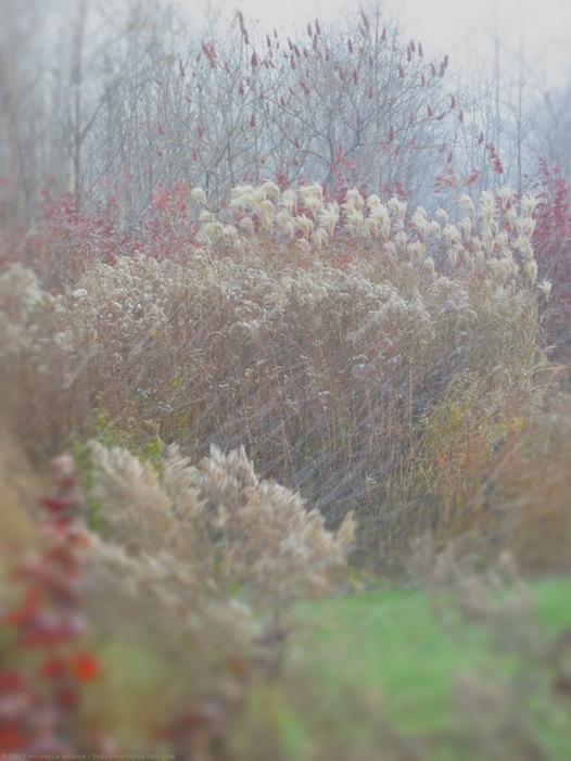 November Snow Squall in the Garden - michaela medina harlow - thegardenerseden.com