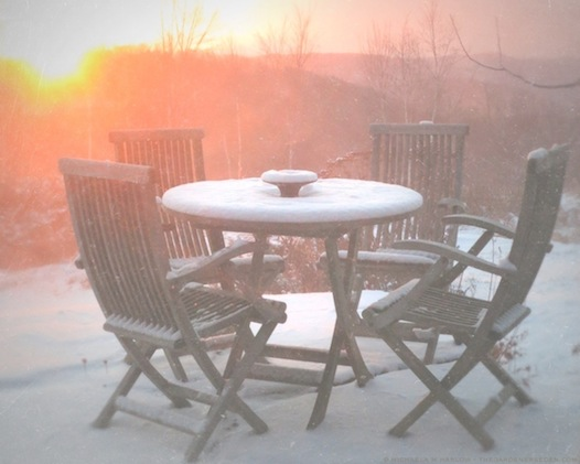 Pink Winter Sunrise on the Terrace - copyright 2013 michaela medina harlow - thegardenerseden.com