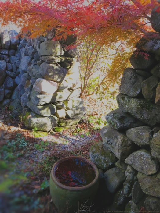 Secret Garden Door and Water Bowl in November (Acer palmatum x dissectum 'Seiryu')- michaela medina harlow - thegardenerseden.com