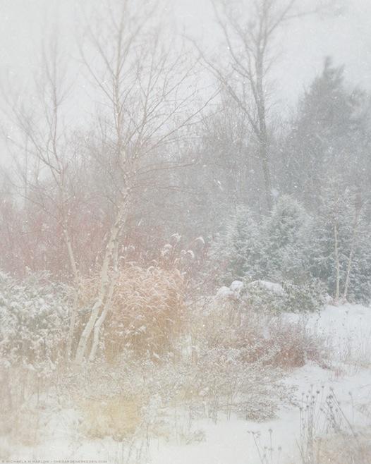 in the winter garden - copyright 2013 michaela medina harlow - thegardenerseden.com
