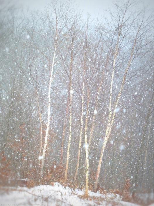 let it snow, let it snow, let it snow - copyright 2013 michaela medina harlow - thegardenerseden.com