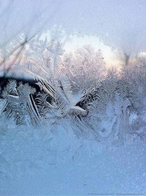 frost_on_the_window_copyright_michaela_medina_harlow_thegardenerseden.com