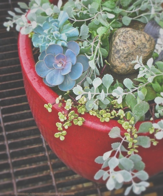 succulent pot, michaela at thegardenerseden.com