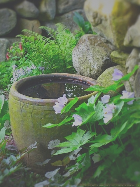 waterbowl in the secret garden, copyright michaela harlow - thegardenerseden.com