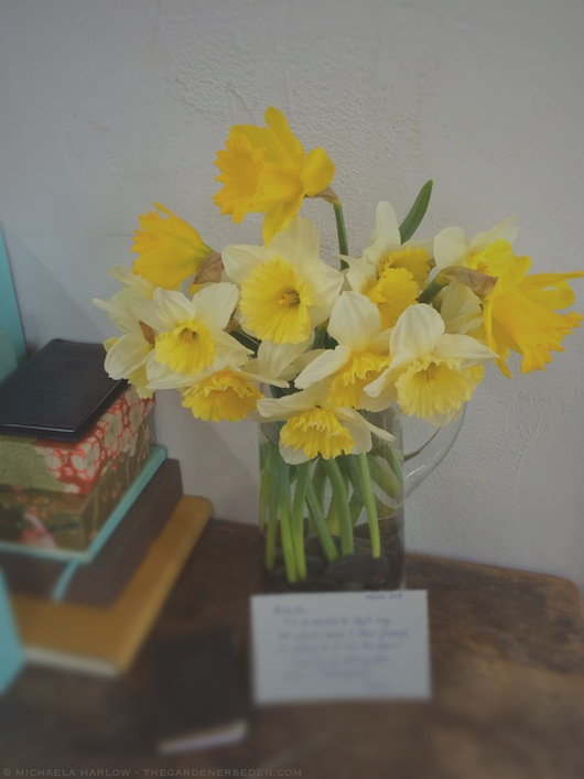 First Daffodil Bouquet of the Season - Michaela Harlow - thegardenerseden.com