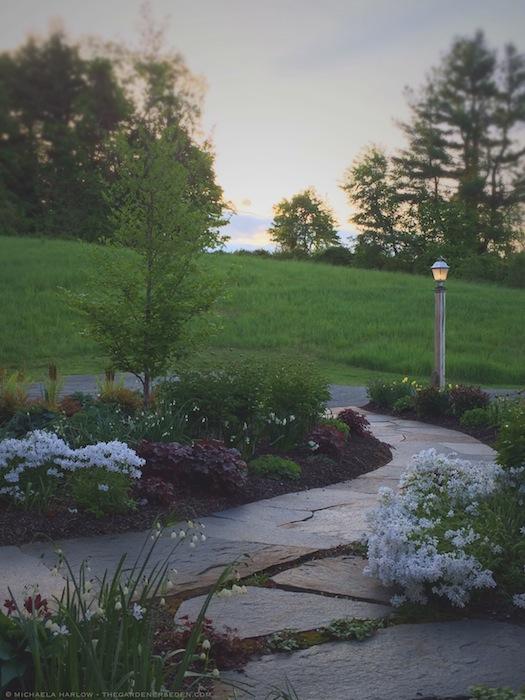 Madrigan_Garden_Michaela_Harlow_Garden_Design_copyright_michaela_harlow_thegardenerseden.com