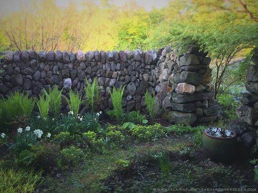 Secret_Garden_with_Ostrich_Fern_and_Sterling_Narcissus_copyright_Michaela_Harlow_thegardenerseden.com